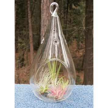 Raindrop Glass Terrarium Air Plant Home Decor, 7-inch