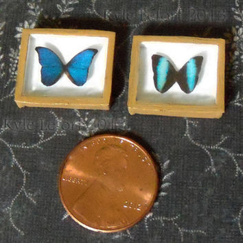 Miniature Riker Mount Displays - Morpho Butterfly Pair