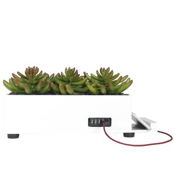 Succulent Power Plant with 4 USB Ports
